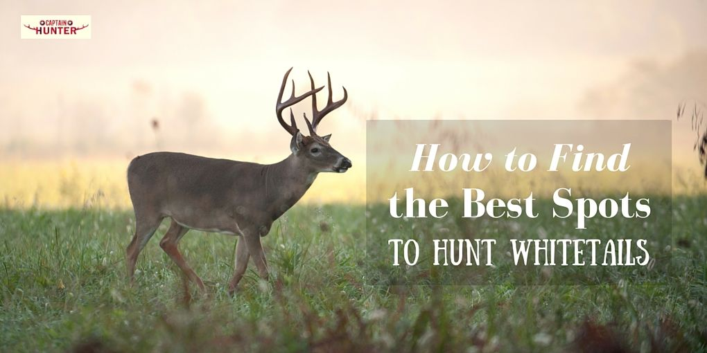 How to Hunt Whitetails Deer