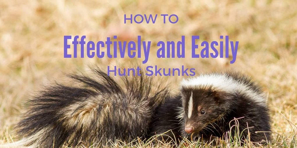 how to kill skunk