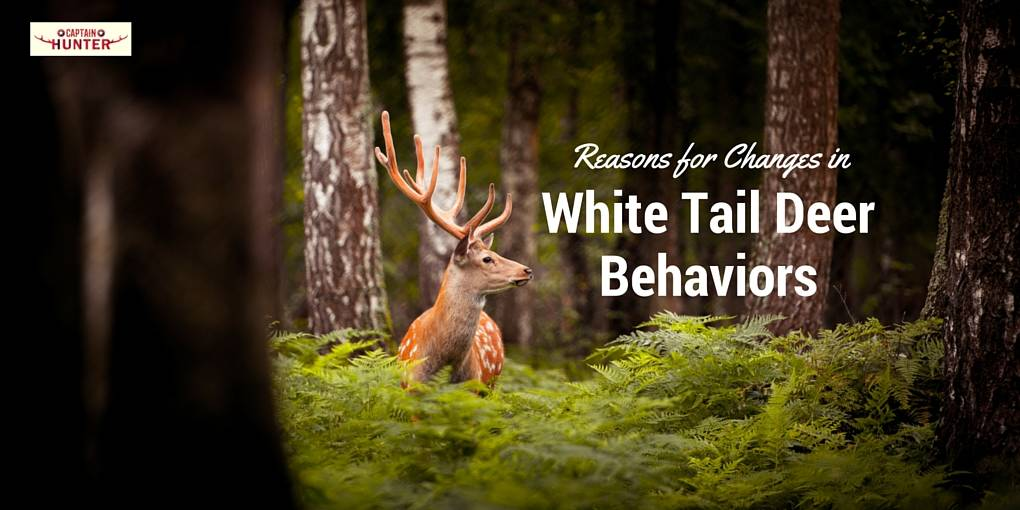 white tai deer behaviors cover