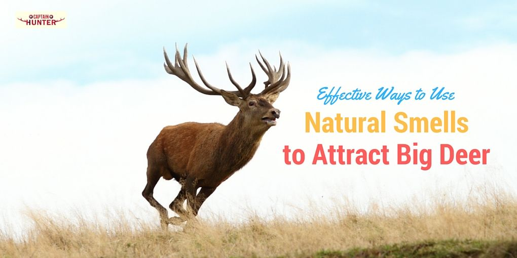 Effective Ways to Use Natural Smells to Attract Big Deer