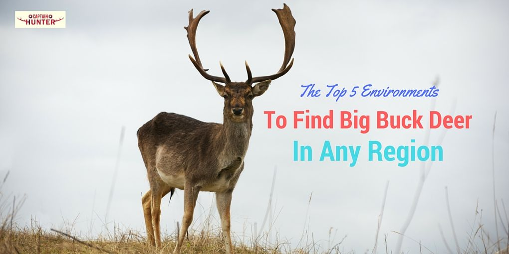 Find Big Buck Deer