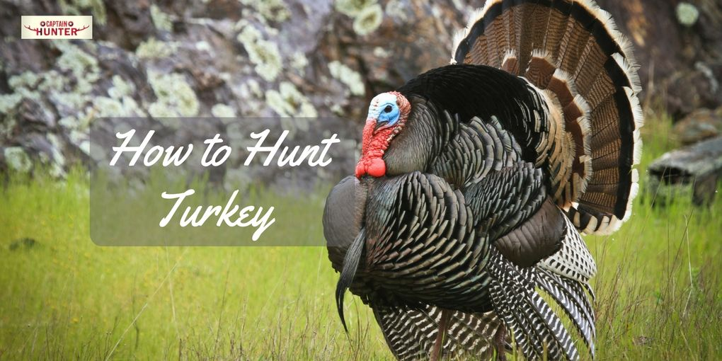How To Hunt Turkey
