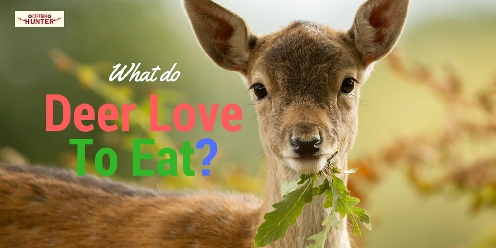 what do deer eat