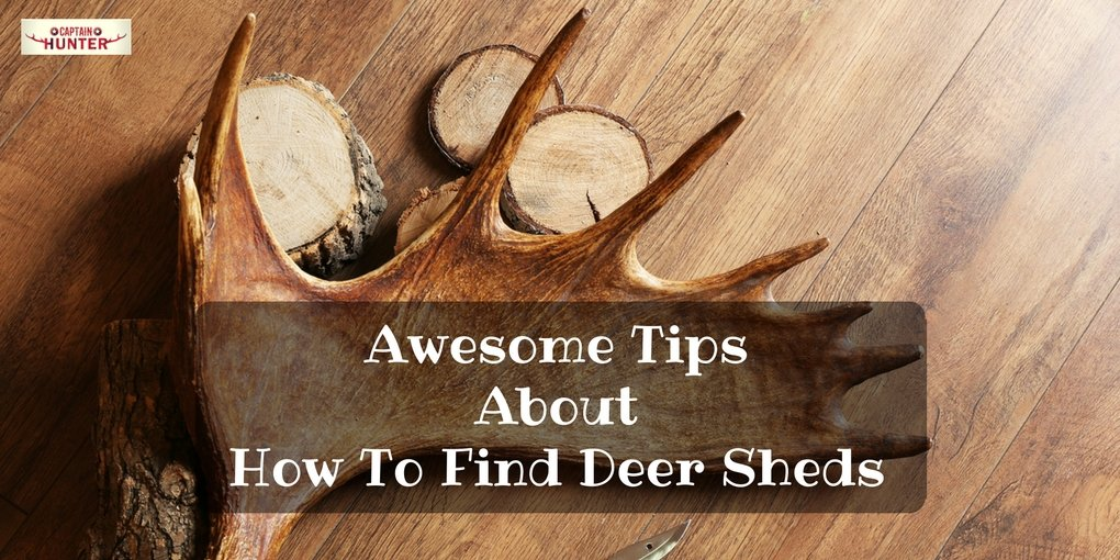 How To Find Deer Sheds