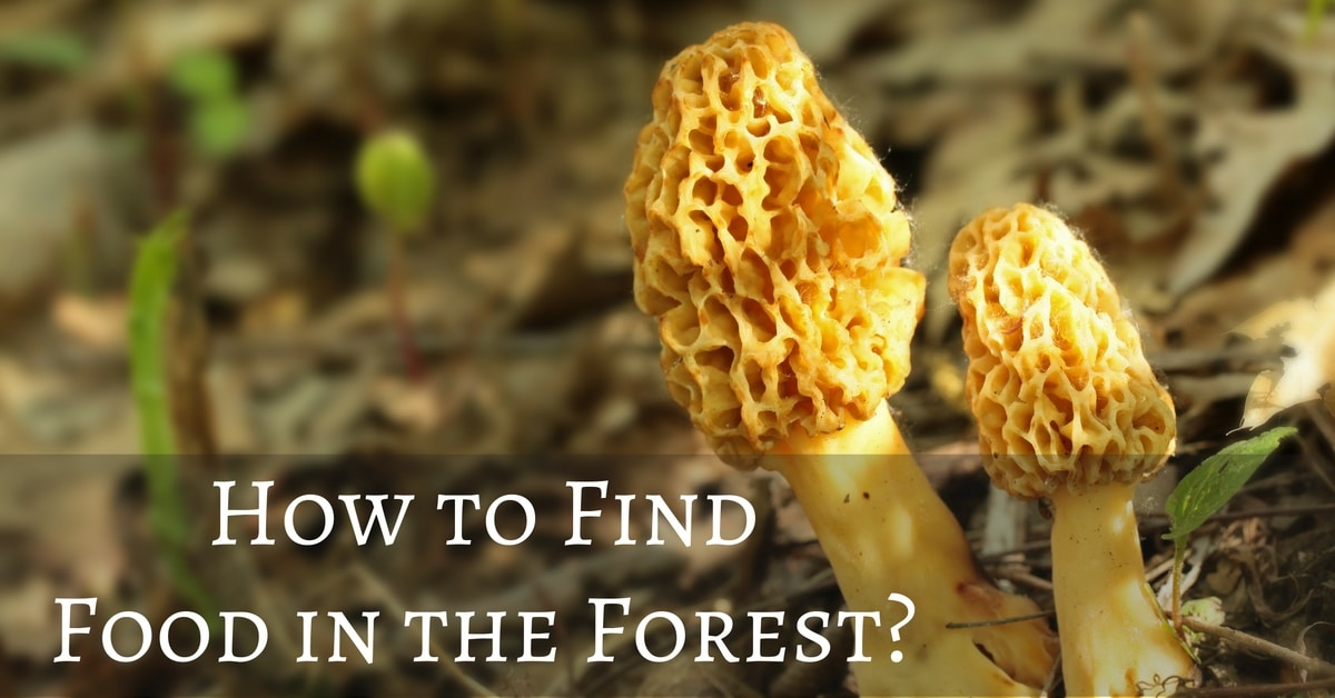 How to Find Food in the Forest?