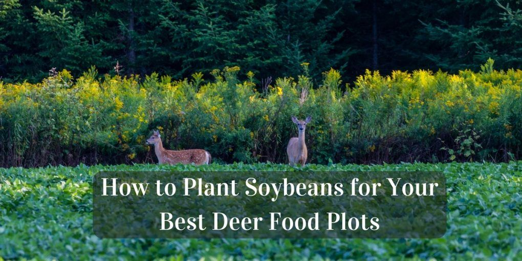 How to Plant Soybeans for Your Best Deer Food Plots
