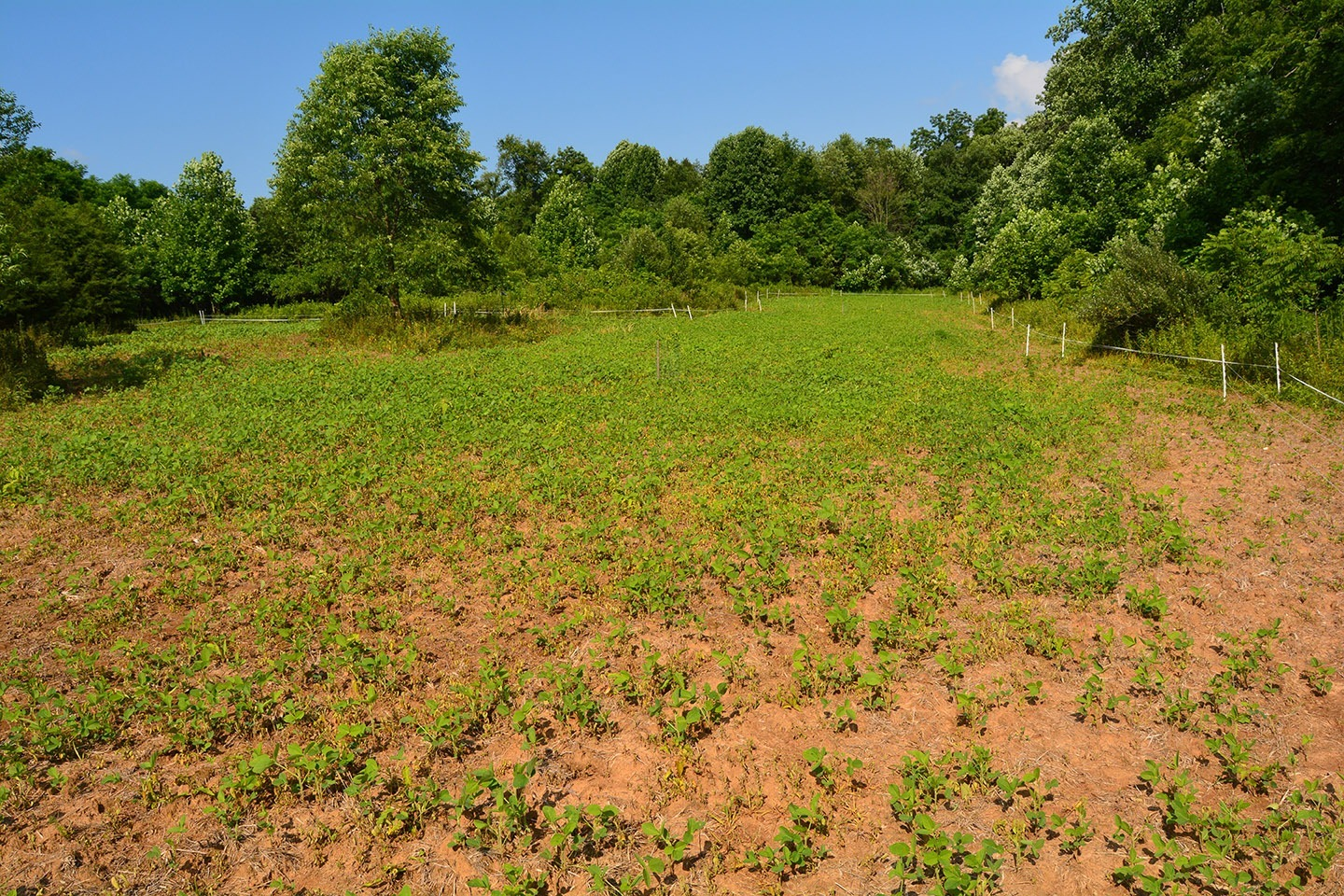 Best Deer Food Plot Fertilizer