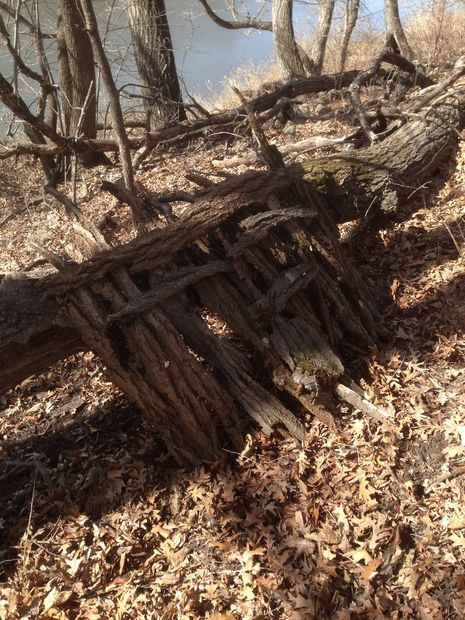 Fallen Tree Survival Shelter