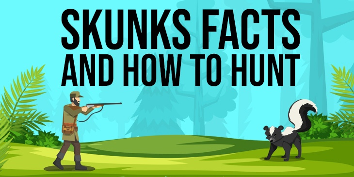 Skunks Facts and How to Hunt Featured Image