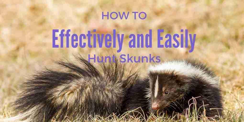 how to kill skunk