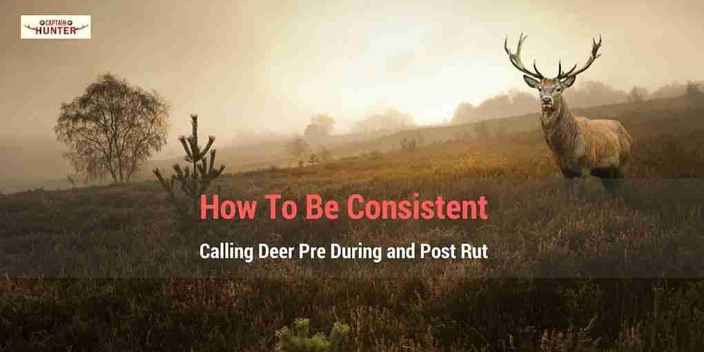 Calling Deer
