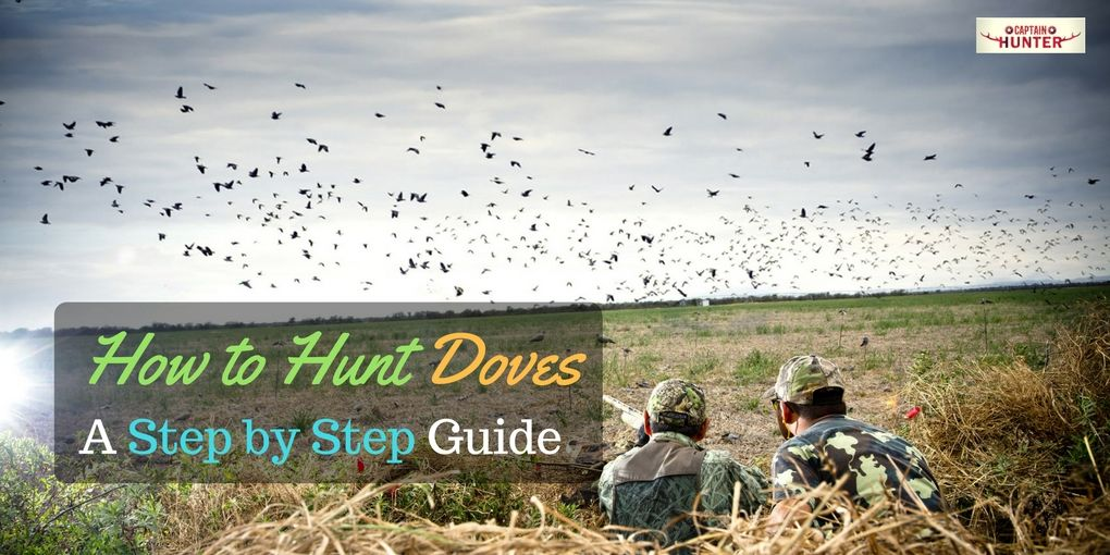 How to Hunt Doves
