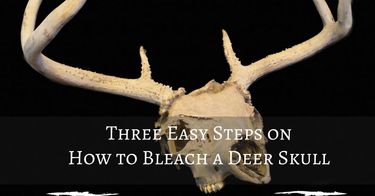 How to Bleach a Deer Skull