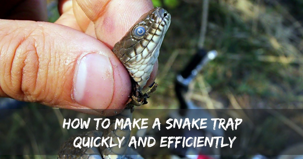 How To Make A Snake Trap Quickly And Efficiently Captain Hunter