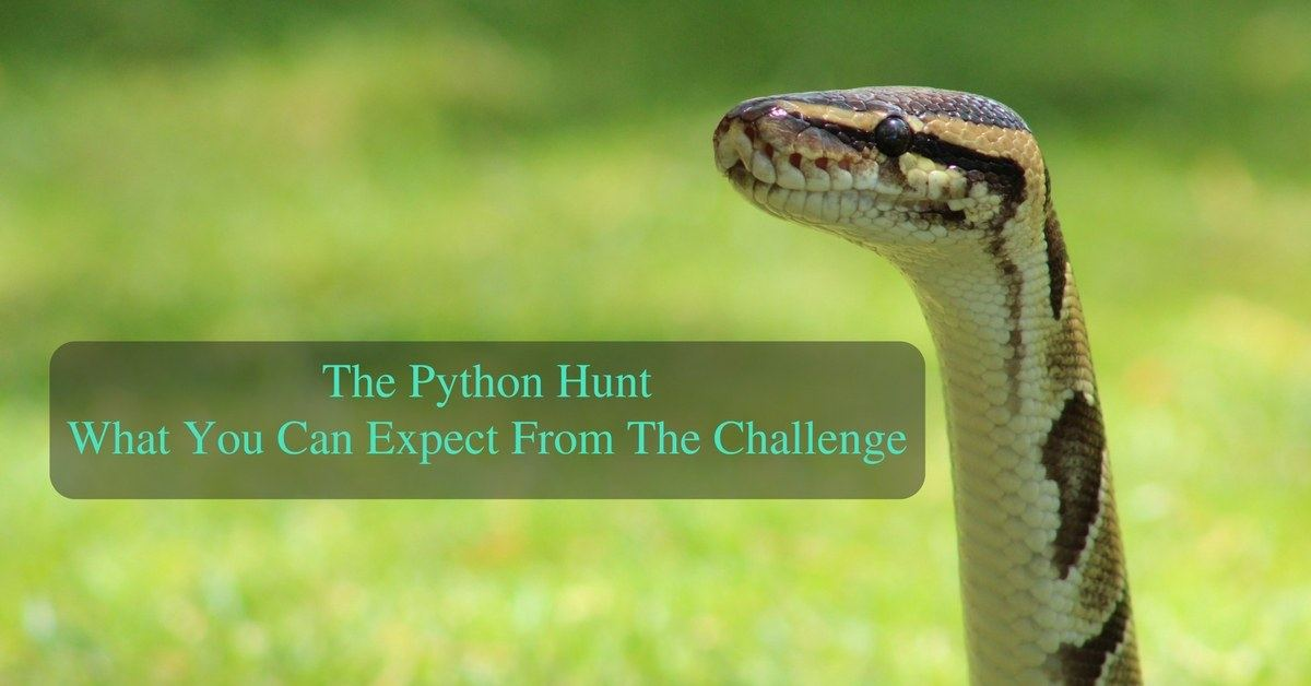 What You Can Expect in The Python Hunt