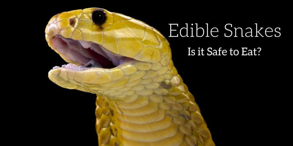 How to Eat a Snake Safely and Correctly