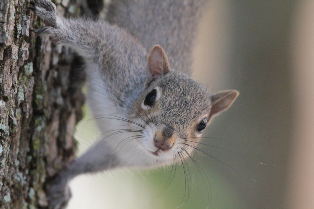 The Best 5 Early Season Squirrel Tips