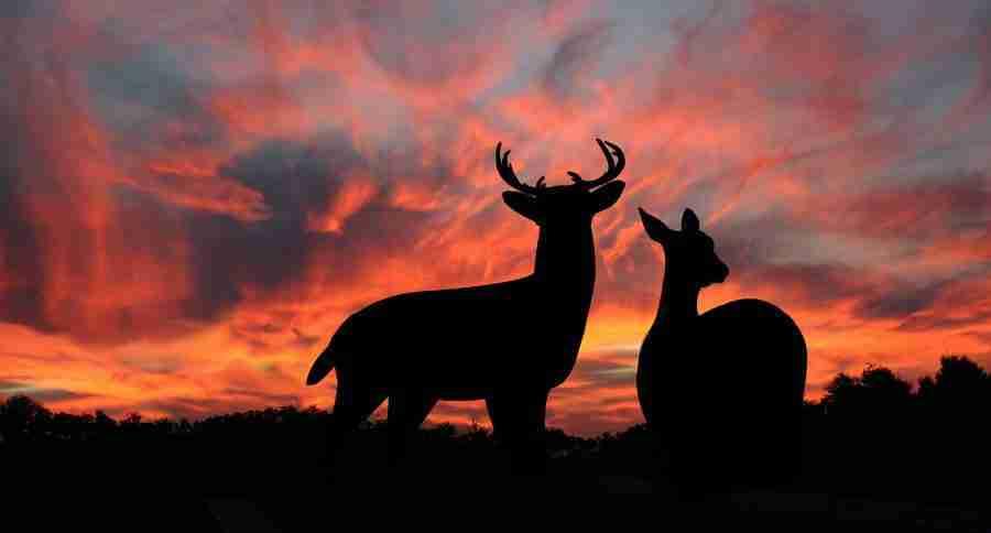 hunting season success