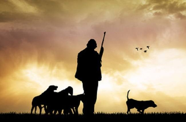 hunter with dogs