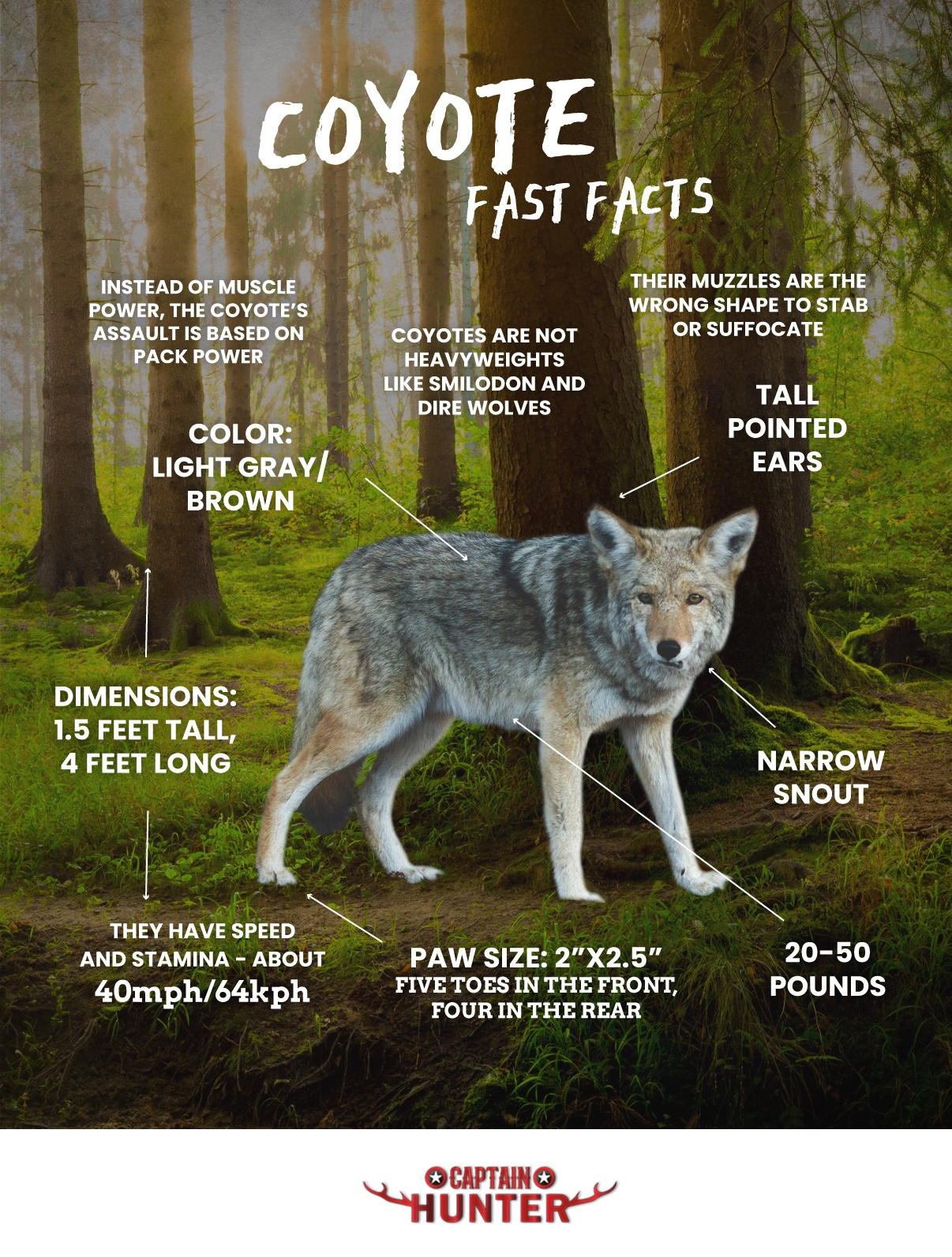 coyote-fast-facts-infographic